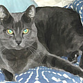Smokey On A Blue Blanket by Jeanne A Martin