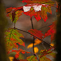Smoky Mountain Color II by Douglas Stucky