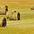 Smoky Mountain Hay by Frozen in Time Fine Art Photography