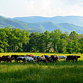 Smoky Mountain Horses