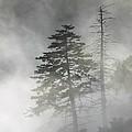 Smoky Mountain Mist by Nunweiler Photography