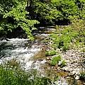 Smoky Mountain Stream by Cynthia Woods
