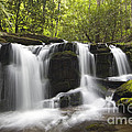 Smoky Mountain Waterfall - D008427 by Daniel Dempster