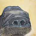 Smooshi by Robert Timmons
