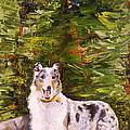Smooth Collie Hiker by Susan A Becker