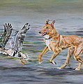 Smooth Collie Trying To Herd Geese by Michelle Miron-Rebbe
