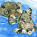 Smooth Trunkfish Pair by Pauline Walsh Jacobson