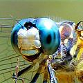 Snack Time Dragonfly by Sheri McLeroy