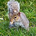 Snack Time For Squirrels by Susie Peek