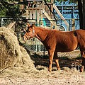 Snacking On Some Hay by Michelle Powell