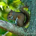 Snacking Squirrel by Stephen Whalen