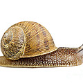 Snail by Elena Elisseeva
