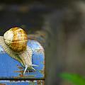 Snail by Ivan Slosar