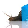 Snail Next To Miniature Mail Envelope by Simon Bratt Photography LRPS