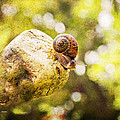 Snail Of A Time by Angela Stanton