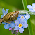 Snail On Flowers by Michael Lustbader