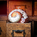 Snail Shell by Art Block Collections