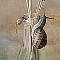 Snails by Nailia Schwarz