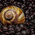Snailshell In Tamarind Bed by Tom Kolossa