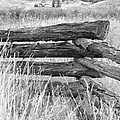 Snake Fence  by Ann E Robson