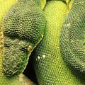 Snake In Green Dress by Munir Alawi