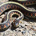 Snake by Robin White