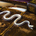 Snake Skeleton And Old Books by Garry Gay
