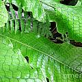 Snake Skin Plant by Jennifer Wheatley Wolf