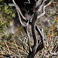 Snake Tree by AR Harrington Photography