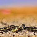 Snake by Viktor Birkus