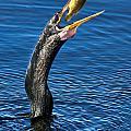 Snakebird by Ronald Lutz