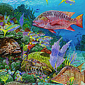 Snapper Reef Re0028 by Carey Chen