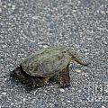 Snapping Turtle 3 by Cassie Marie Photography