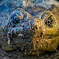 Snapping Turtle by Gaurav Singh