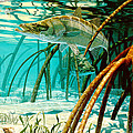 Snook In The Mangroves by Don  Ray