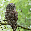 Snooze Time - Owl by Rod Wiens