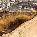 Snoozing On The Rocks by Theo OConnor