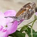 Snoutnose Butterfly by Randy Mass