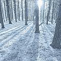 Snow Amongst The Pines by John Hansen