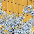 Snow And Golden Glass by M Dale