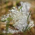 Snow And Ice Macro by Sandi OReilly