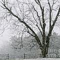 Snow And Pecan Tree by Sue McGlothlin