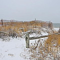 Snow And Sand by Catherine Reusch Daley