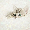 Snow Baby by Amy Tyler