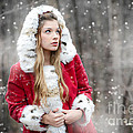Snow Beauty In Red by Jt PhotoDesign