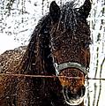 Snow Beauty by Kristie  Bonnewell