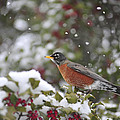 Snow Bird by Terry DeLuco
