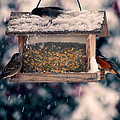 Snow Birds by Bonnie Bruno