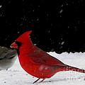 Snow Birds by Joshua Bales