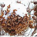 Snow Bonnet by Debbie Portwood